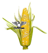 ColonelCorn's Avatar